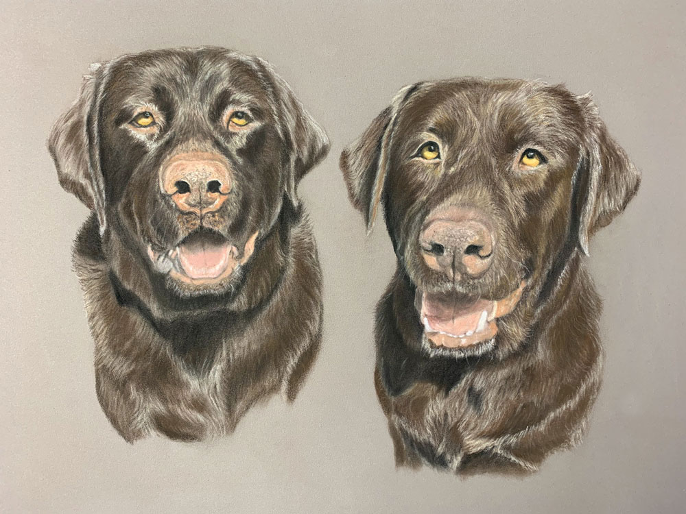chocolate lab pastel drawing