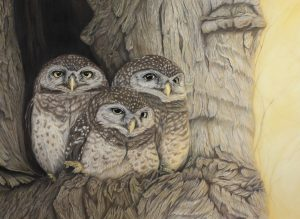 Little Owlet Sunset Pastel Drawing