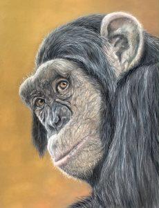 Chimpanzee Pastel Drawing